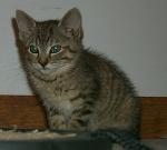 <img:http://www.goodsol.com/cats/ace6.jpg>