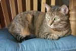 <img:http://www.goodsol.com/cats/q4.jpg>
